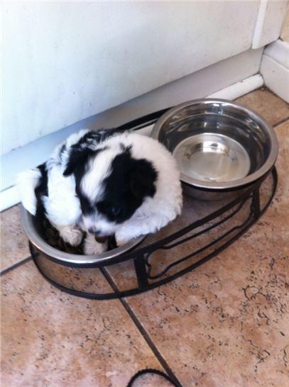 Puppy Feeder Bowls Dish